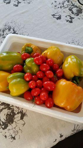 庭の野菜たち4.jpg
